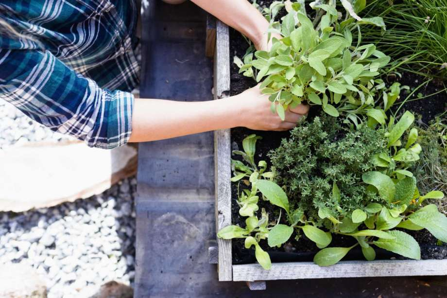 7 Golden Rules For First-Time Gardeners!