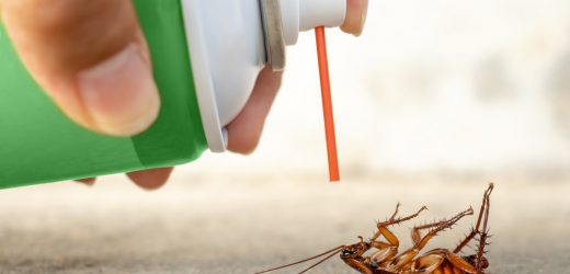 Guide To Roach Extermination: Things Homeowners Must Know!